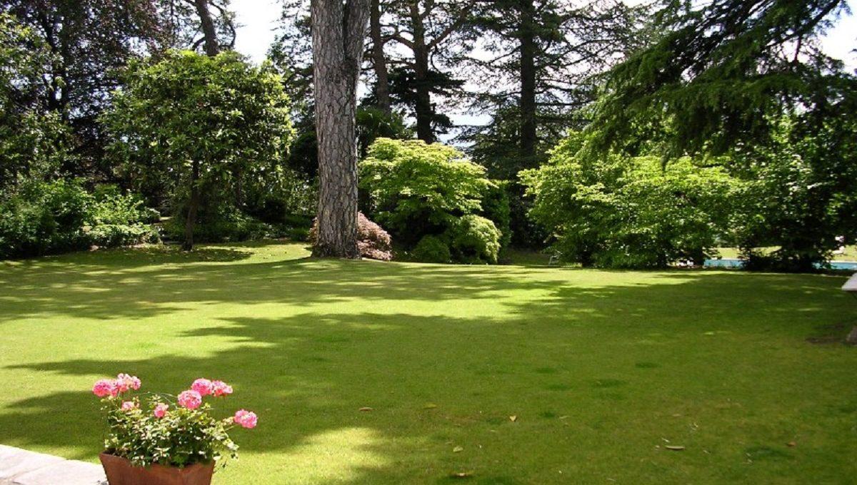 beautiful plants in the garden