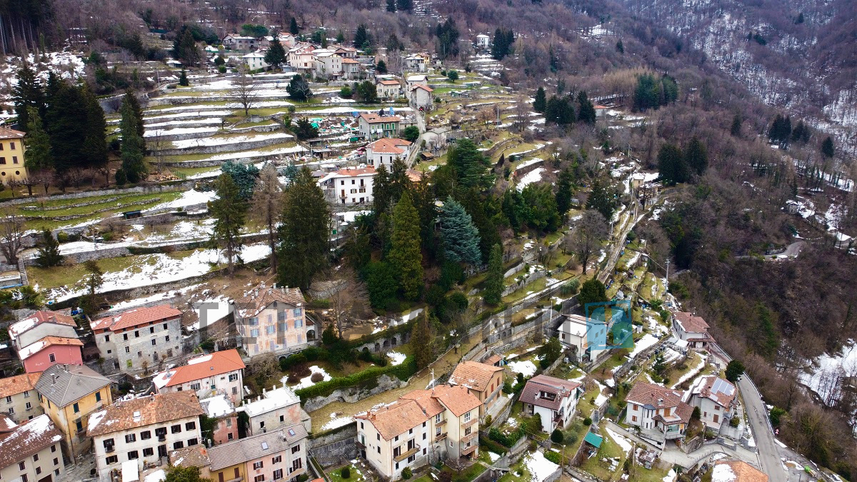 property in lemna